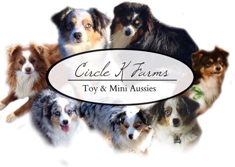 puppy farm near me circle k farms teacup tiny toys toys and miniature australian shepherds
