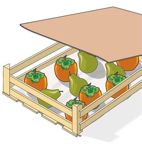 come utilizzare i cachi in cucina raccogliere i cachi in giardino cose di casa