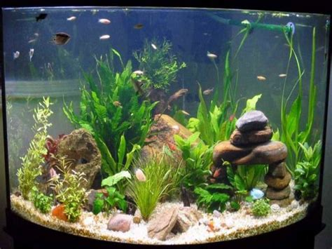 how to decorate your boring fish tank gardens modern