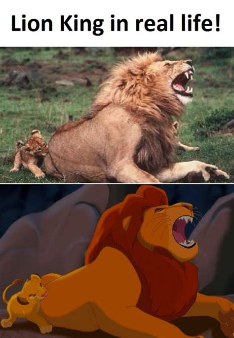 Lion King Cell Phone Meme - lion king funny pictures quotes memes jokes