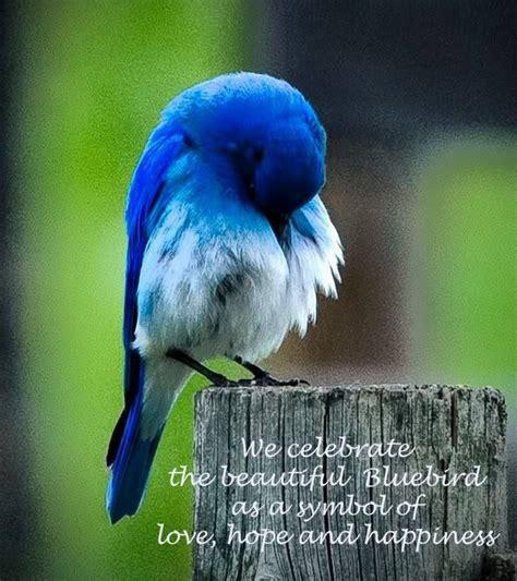 quotes about bluebirds quotesgram