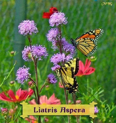 Butterfly Flower Garden 17 Best Ideas About Butterfly Garden Plants On