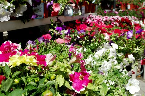 annuals for the garden learn about annual garden plants