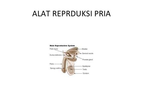 Alat Tes Kesuburan Pria Dan Wanita sistem reproduksi 3