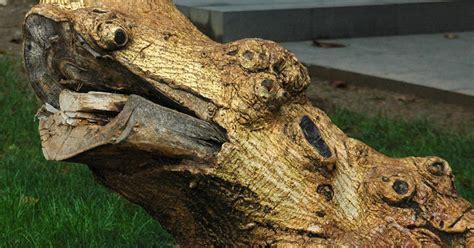 imagenes de jardines con troncos c 243 mo decorar troncos de jard 237 n plantas