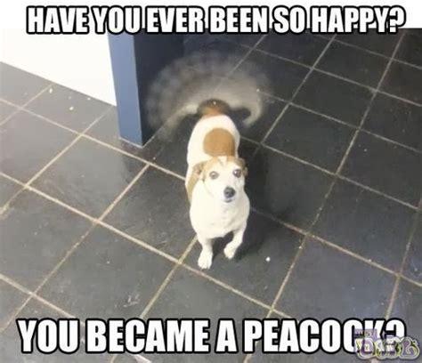 So Funny Meme - dog funny memes