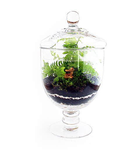 Vase Terrarium by File Terrarium Vase Jpg Wikimedia Commons