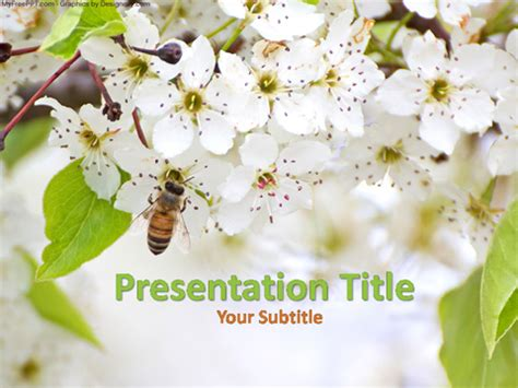 Free Honey Bee Powerpoint Template Download Free Powerpoint Ppt Bee Powerpoint Template