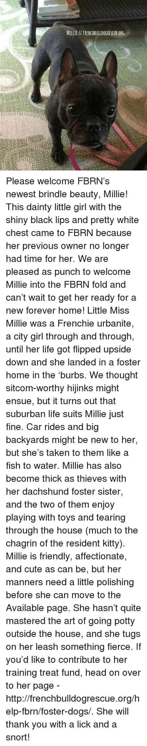 Welcoming Nollie To The Shiny Fold by 25 Best Memes About Millie Millie Memes