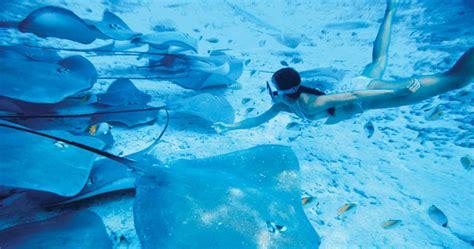 snorkeling  moorea tropixtraveler