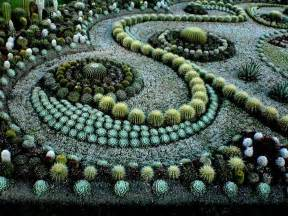 cactus garden design ideas garden pinterest