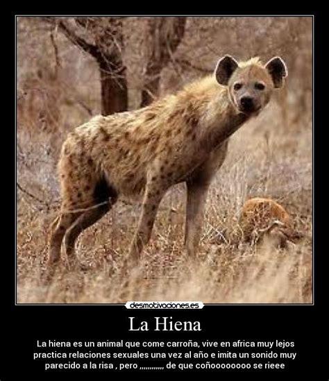 imagenes de leones vs hienas im 225 genes y carteles de hiena pag 2 desmotivaciones