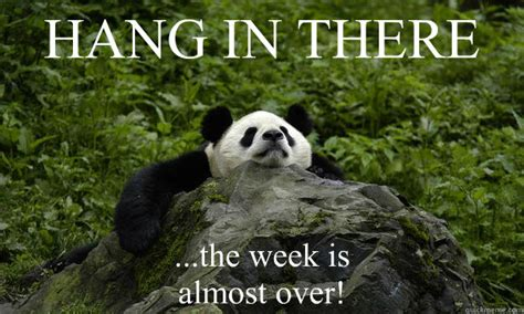 Hang In There Meme - hang in there the week is almost over misc quickmeme
