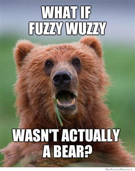 Bear Meme - bear memes www imgkid com the image kid has it