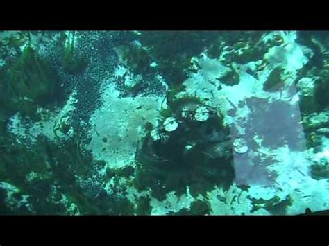 glass bottom boat tours silver springs florida world famous glass bottom boat tours at silver springs