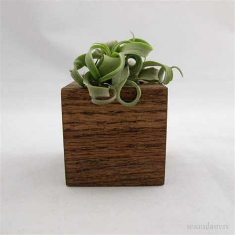 indoor modern planters air plant cube streptophylla mocha by sea asters