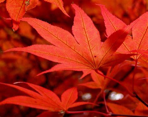 file maple leaf gardens 2009 jpg wikimedia commons file maple leaves in october 2009 jpg wikimedia commons