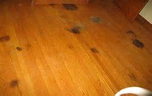 Hardwood Floor Stain Removal Pets Stains