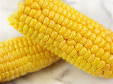 True Gold Corn   Baker Creek Heirloom Seeds