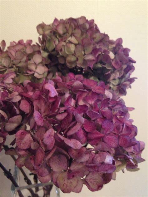 dried hydrangeas flowers pinterest
