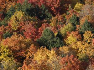 fall colors colorado fall foliage 2016 pictures cbs news