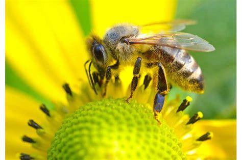 imker hessen bienenfreundliches hessen bienen natur
