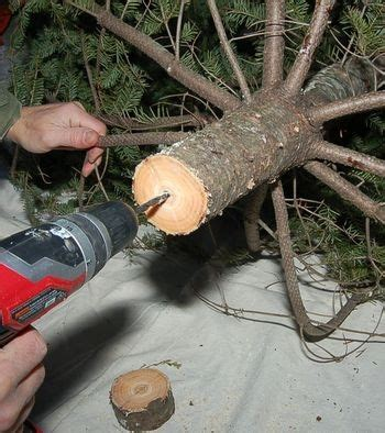 how keep your christmas tree fresh longer we know how