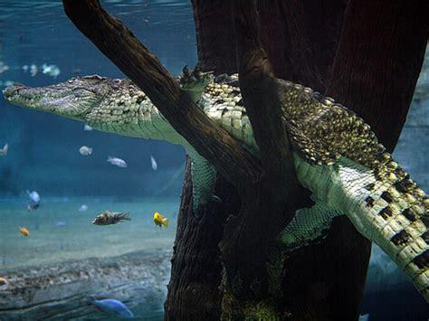 wohnung unter wasser tierpark hagenbeck tropen aquarium