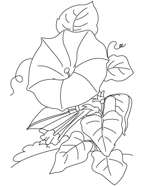 Cp Terompet flowers on vines drawings sketch coloring page