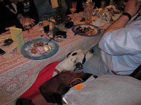 Schöner Erster Advent by Weihnachtsfeier 2008 Haustiersuche At
