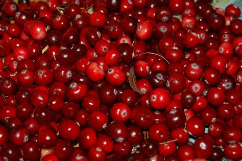 10 top countries in cranberry production worldatlas com