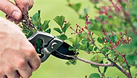 how to trim trees how to trim a tree the tree center