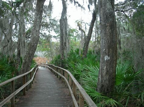 how to preserve your historic panoramio photo of boardwalk timucuan ecological