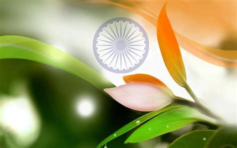 whatsapp wallpaper free download hd india independence day whatsapp dp images wallpapers