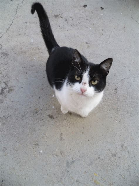 imagenes blanco y negro de gatos im 225 genes tiernas a blanco y negro imagui