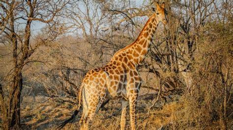imagenes en 3d de animales salvajes animales salvajes en safari por africa fondos de