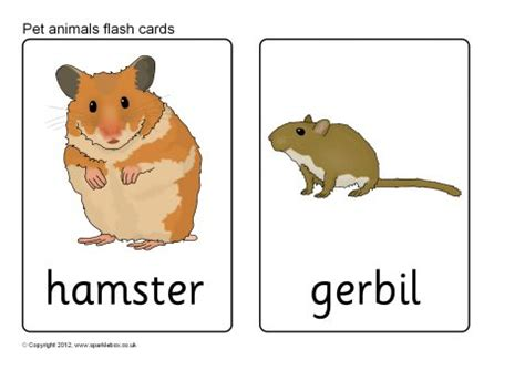 our set of printable quot jungle animal flash cards quot are a pet animal flash cards sb7724 sparklebox