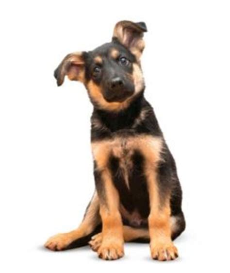best puppy food for german shepherd best food for german shepherds 8 vet recommended brands