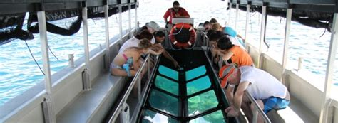 cairns glass bottom boat reef tours for the non swimmer great barrier reef cairns australia