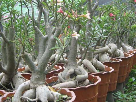Nature Stek Bunga cara merawat tanaman dan aneka tanaman hias july 2015