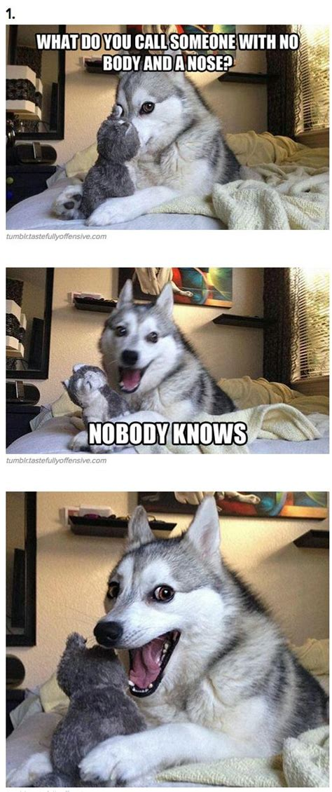 Pun Husky Meme - 7 pun dog puns that will instantly brighten your day