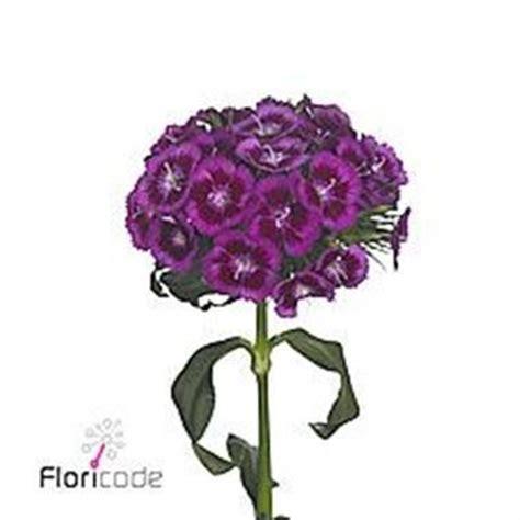 williams wholesale sweet williams wholesale flowers uk wedding flowers