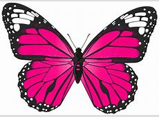 Butterfly Clip Art   Free Download Clip Art   Free Clip ... Free Clipart Downloads Butterflies