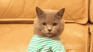 cat gif cat work gif cat work working discover gifs