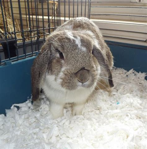 bedding for rabbits flaked paper bedding norfolk industries
