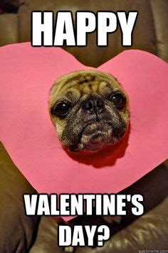 images  pugs    pinterest funny