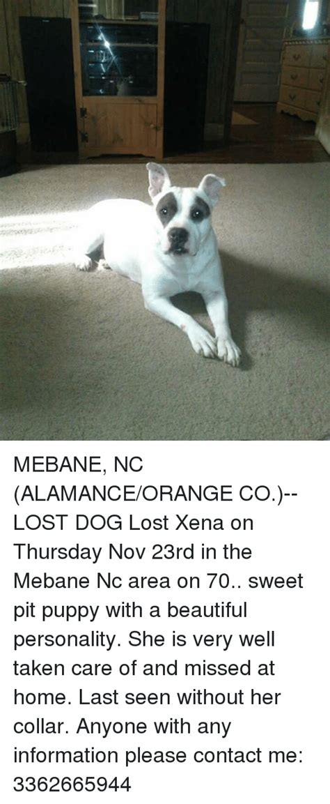 Orange Dog Meme - mebane nc alamanceorange co lost dog lost xena on