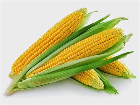 Pakan Ternak Tongkol Jagung 15 manfaat mengkonsumsi jagung untuk kesehatan