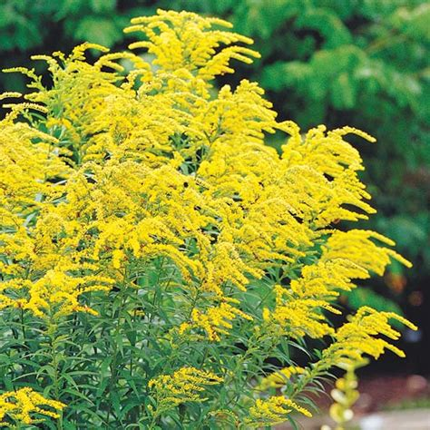 fall flowering perennials top fall flowers for your garden