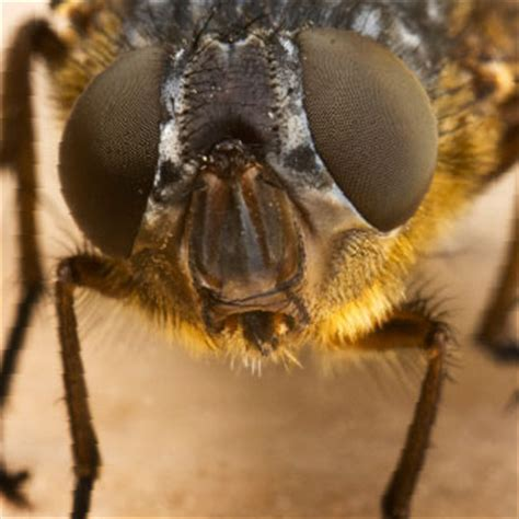 blo fly murda forensic investigations can a fly solve a murder case